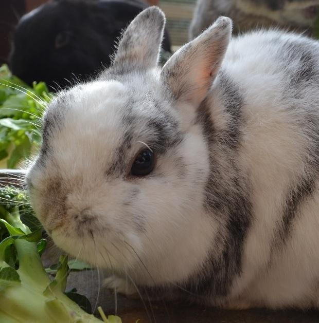 wie können kaninchen abnehmen